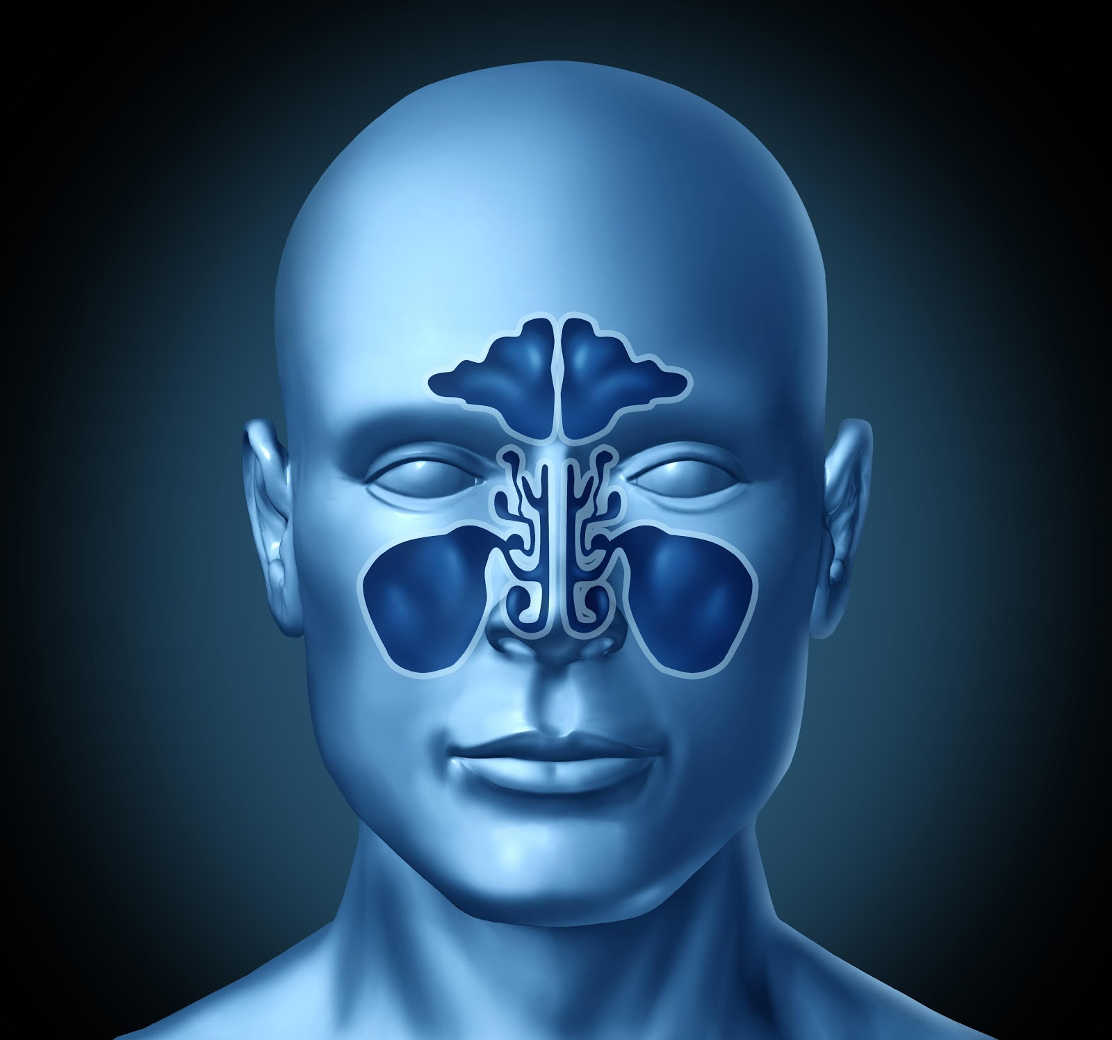 human sinus cartoon